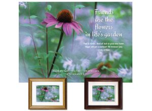 Friendship Gift - Coneflower