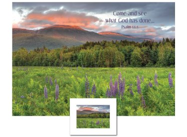 Inspirational Art - Come and See (Lupines)