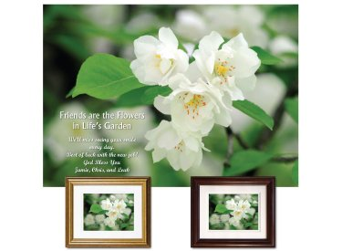 Friendship Gift - Crabapple Blossoms