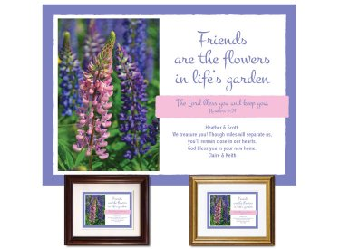 Friendship Gift - Lupine